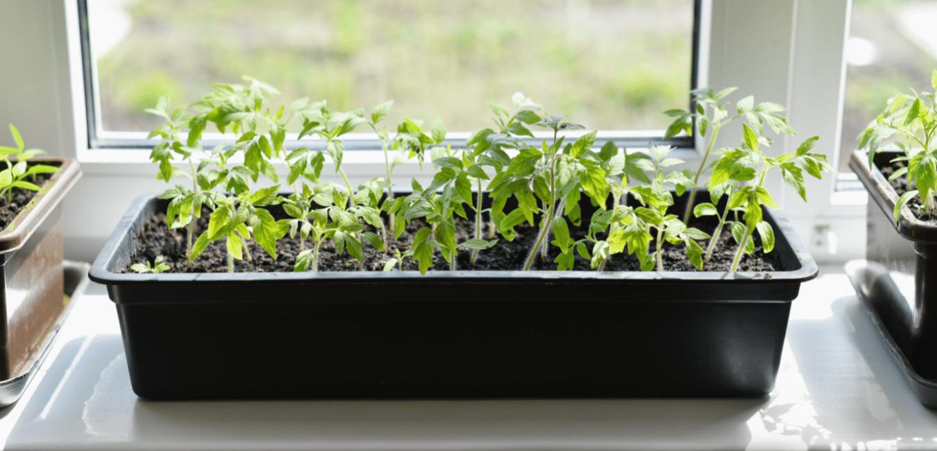 grow herbs inside